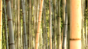 bamboo, forest, bamboo cane, good for environment